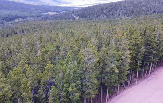 2.46 Acre – Fully Treed Paradise